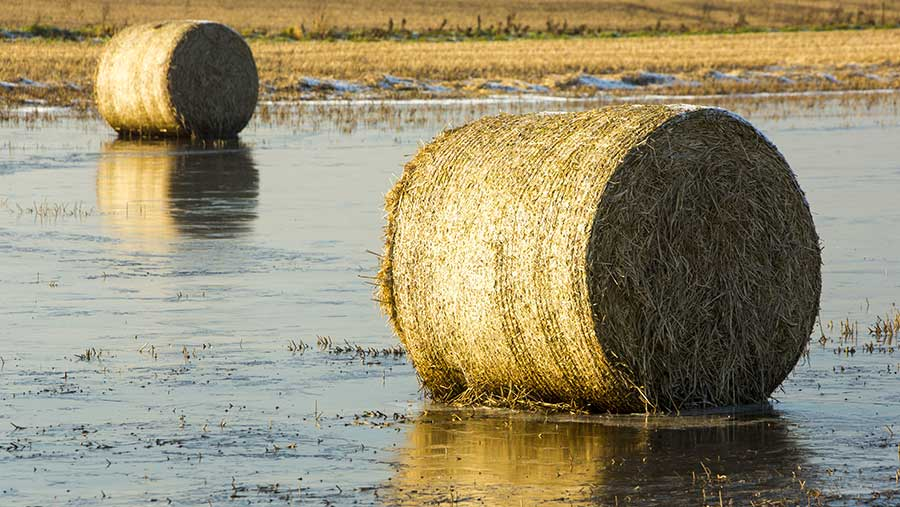 05082019 bales on flooded land c Global Warming Images Shutterstock2358601a1 - Radio Samoa