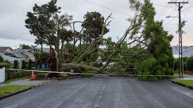tree fallen down in storm lost power nzh - Radio Samoa